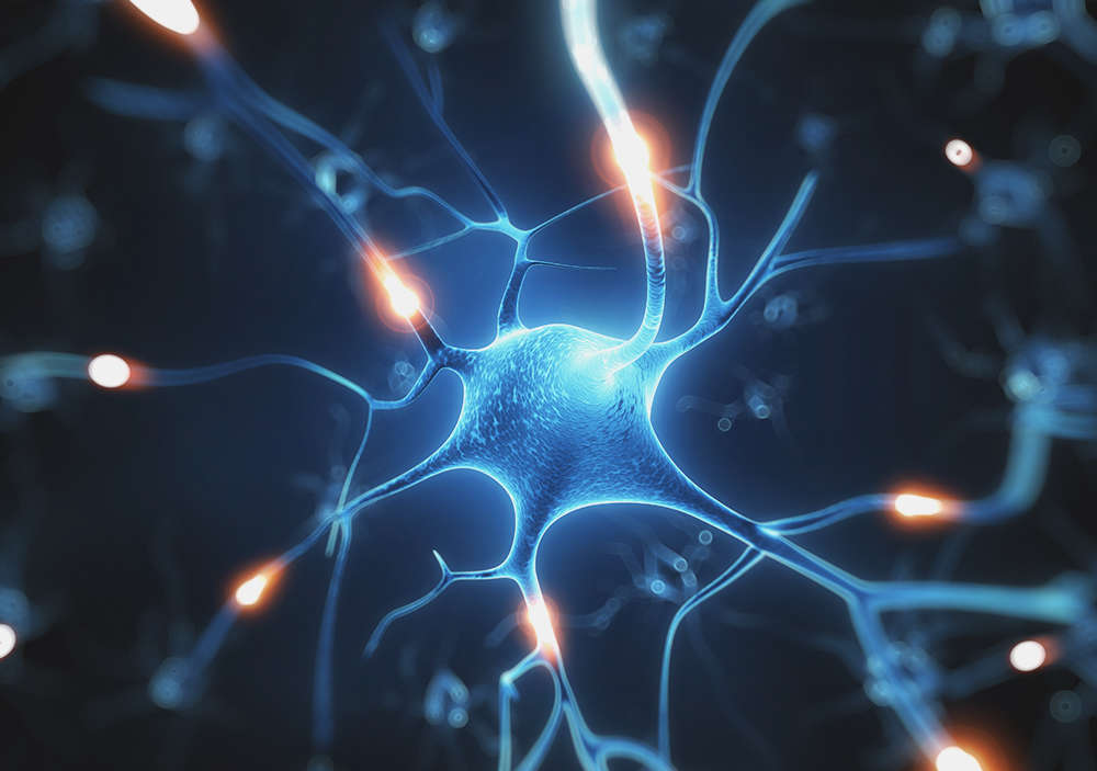 How Play Wires Kids Brains For Social >> Parenting Styles May Rewire Kids Brains